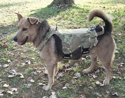 Fight and Flight  - Tactical K9 Harness