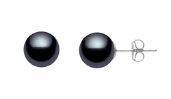 Premium Pearl, Inc - Akoya Cultured Pearl Stud Earrings