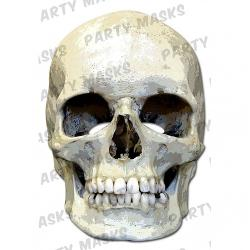 Mask-arade - Skull party mask!