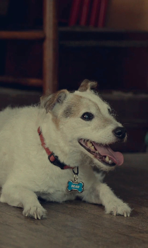 Unknown Actor with Lupine Adjustable Dog Collar in While We're Young