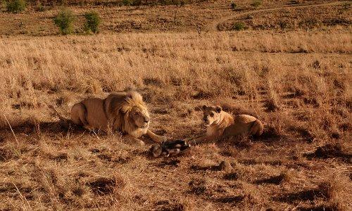 Kruger National Park Skukuza, South Africa in Blended