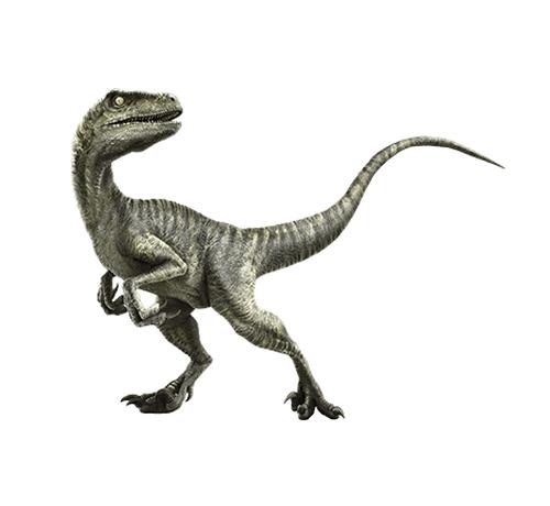 Velociraptor by Seth Engstrom & Dean Sherriff (Concept Artist) in Jurassic World