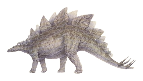 Stegosaurus by Seth Engstrom & Dean Sherriff (Concept Artist) in Jurassic World