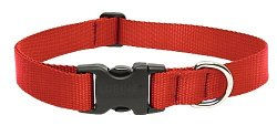 Adjustable Dog Collar by Lupine in While We're Young